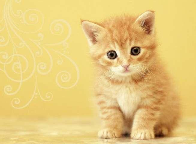 بالصور اجمل الصور للقطط في العالم , صور متعدده للقطط في العالم 398 7