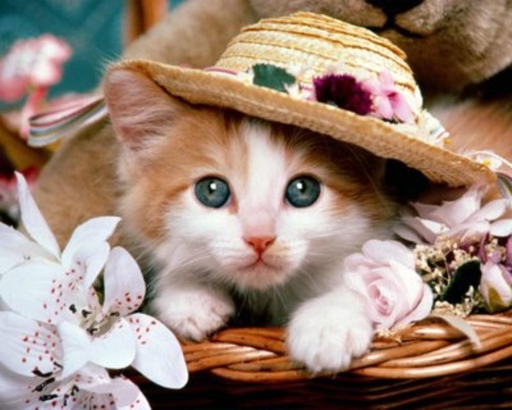 بالصور اجمل الصور للقطط في العالم , صور متعدده للقطط في العالم 398 8