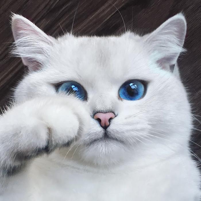 بالصور اجمل الصور للقطط في العالم , صور متعدده للقطط في العالم 398 9
