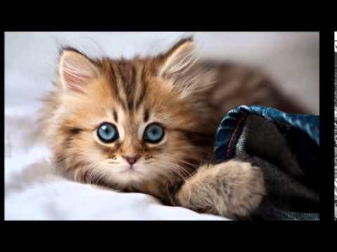 صوره اجمل الصور للقطط في العالم , صور متعدده للقطط في العالم