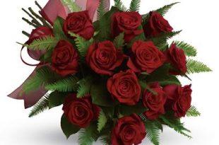 بالصور ازهار جميلة , صور لاجمل الازهار الطبيعيه 4973 12 310x205