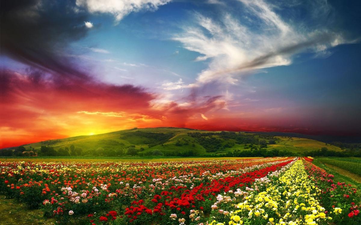 بالصور اجمل صور الصباح , صور لصباح جميل و رائع 5094 10