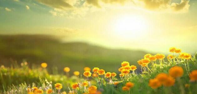 بالصور اجمل صور الصباح , صور لصباح جميل و رائع 5094 6