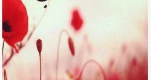 صوره صور مساء الحب , اجمل الصور لمساء الحب
