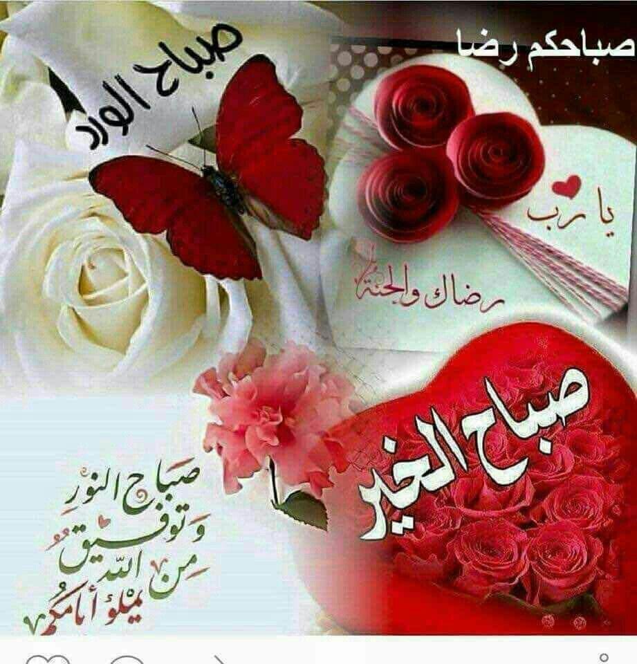 بالصور صباح الورد حبيبتي , اجمل الصور لصباح الخير والورد 6036 4