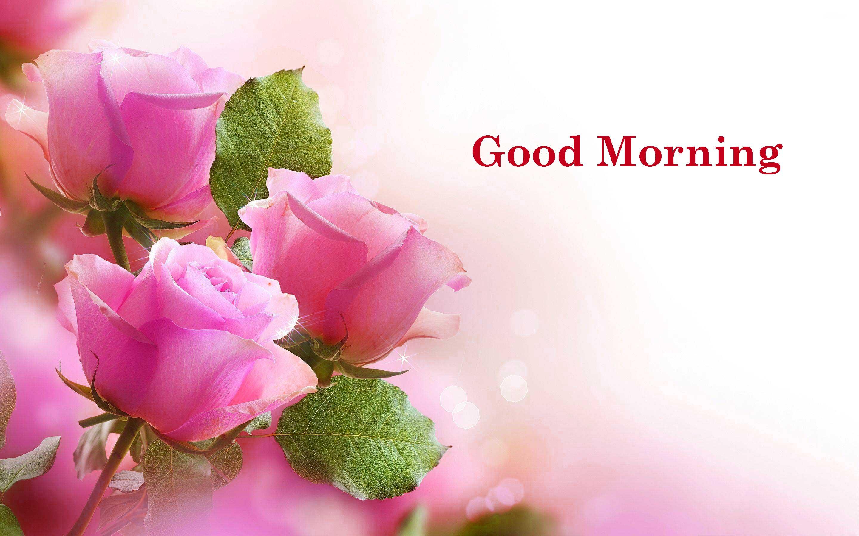بالصور صباح الورد حبيبتي , اجمل الصور لصباح الخير والورد 6036 8