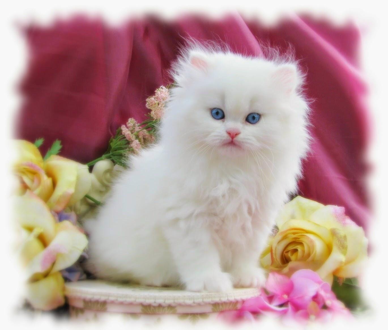 بالصور اجمل صور قطط , صور جميله عن القطط 6108 1