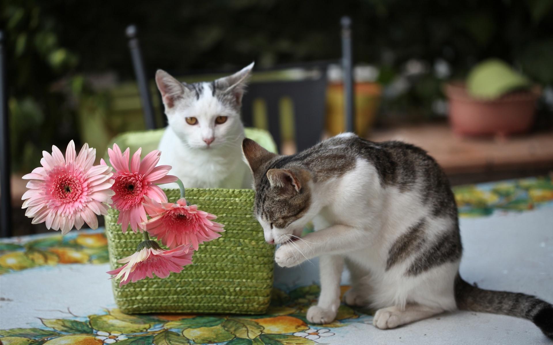 بالصور اجمل صور قطط , صور جميله عن القطط 6108 10