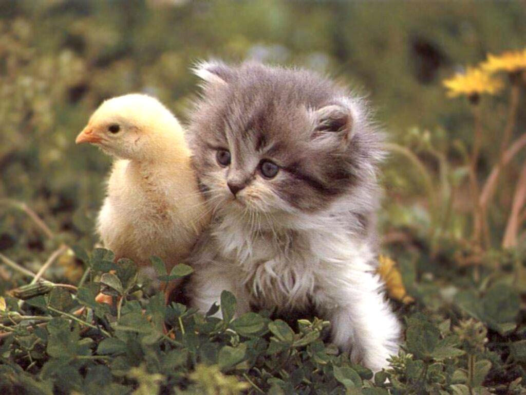 بالصور اجمل صور قطط , صور جميله عن القطط 6108 11