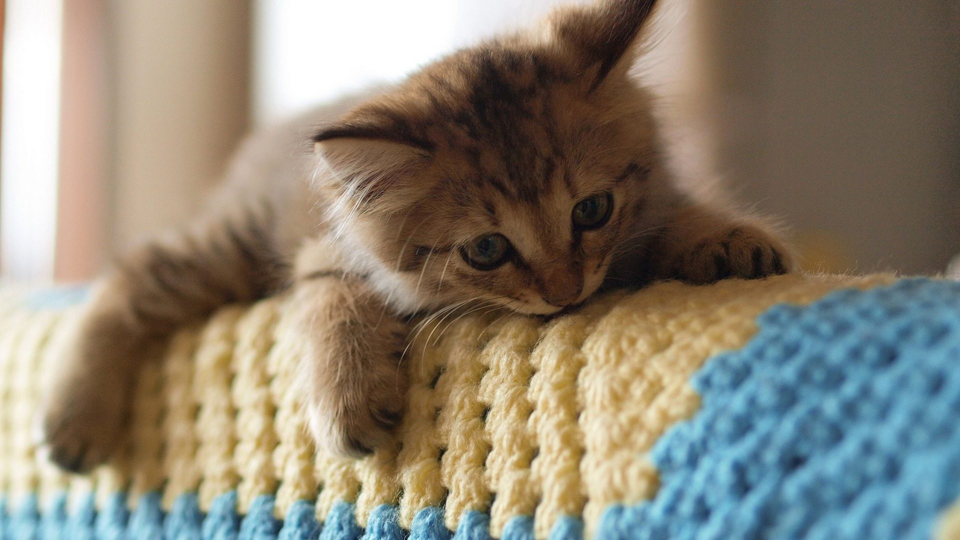 بالصور اجمل صور قطط , صور جميله عن القطط 6108 12