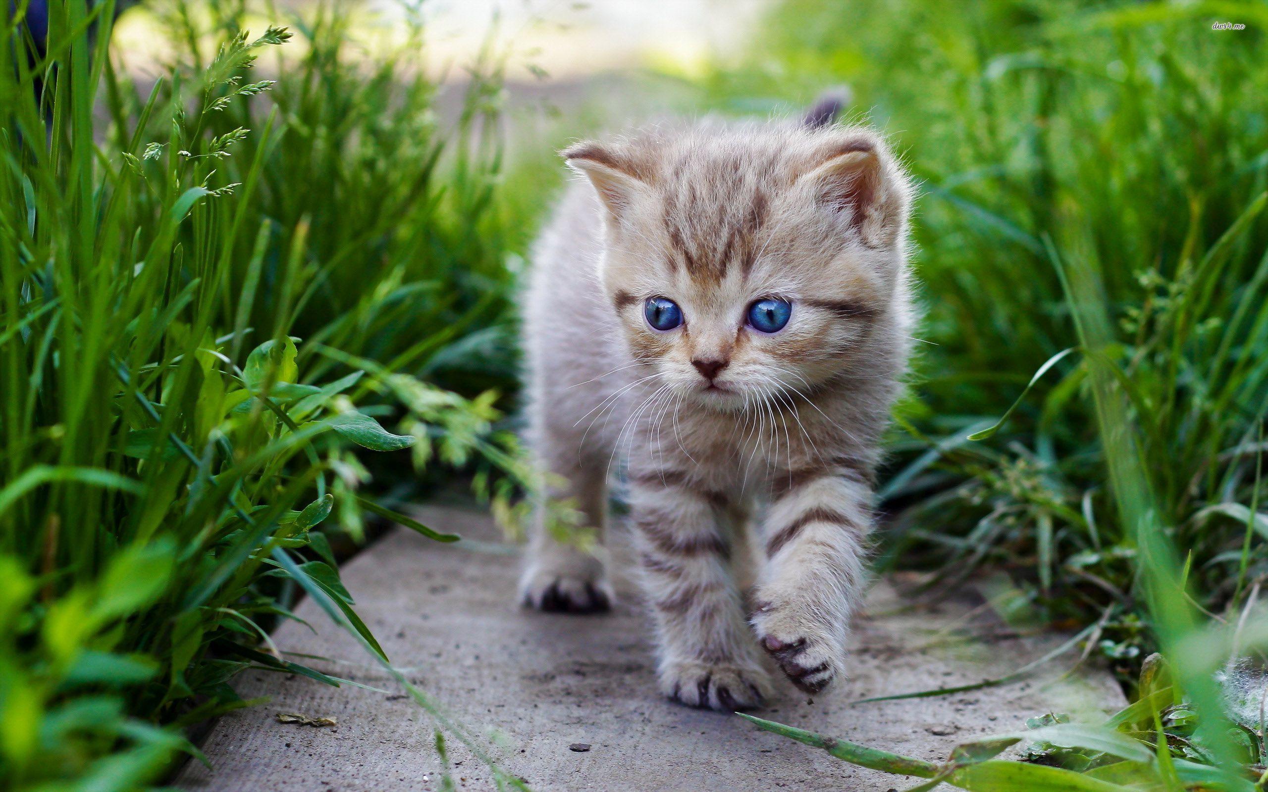 بالصور اجمل صور قطط , صور جميله عن القطط 6108 13
