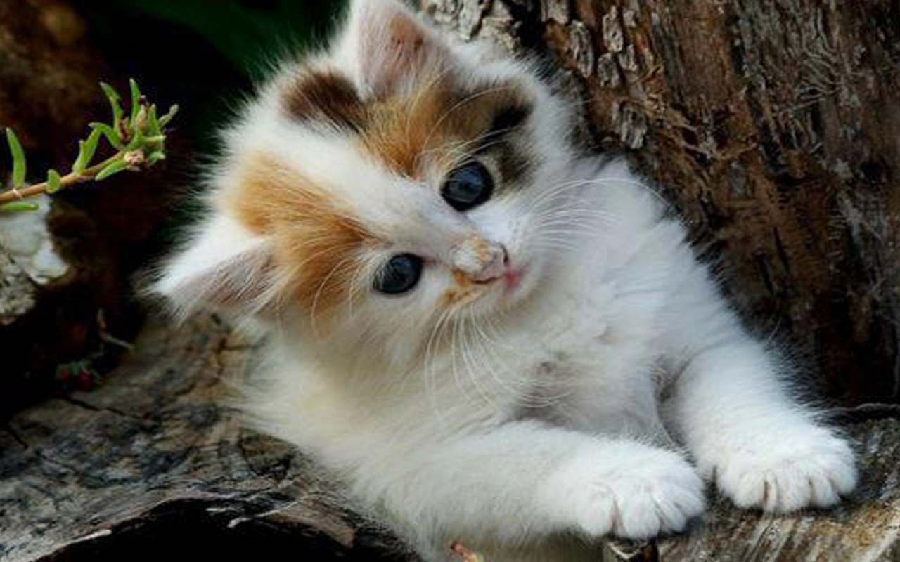 بالصور اجمل صور قطط , صور جميله عن القطط 6108 14