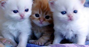 صور اجمل صور قطط , صور جميله عن القطط