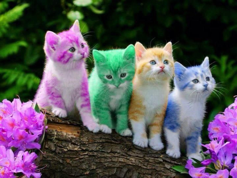 بالصور اجمل صور قطط , صور جميله عن القطط 6108 2
