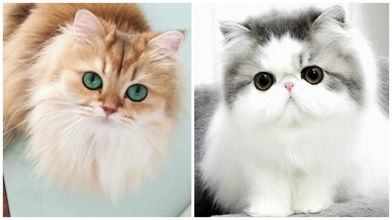 بالصور اجمل صور قطط , صور جميله عن القطط 6108 3