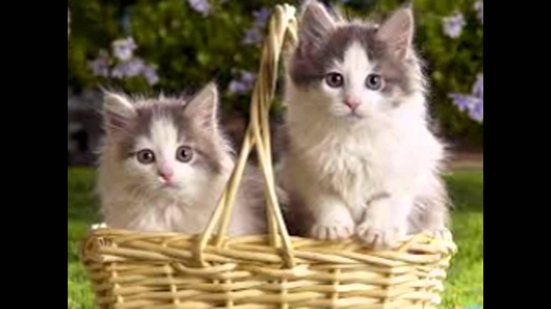 بالصور اجمل صور قطط , صور جميله عن القطط 6108 4