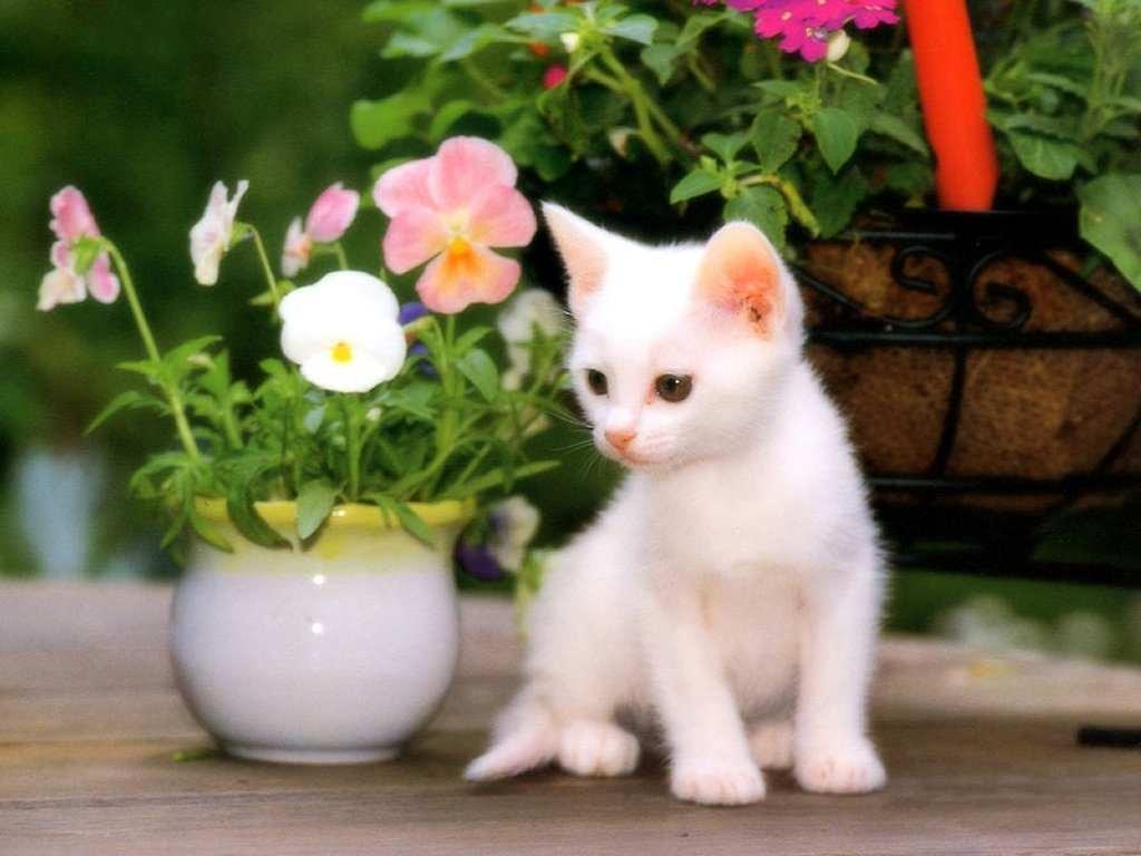 بالصور اجمل صور قطط , صور جميله عن القطط 6108 5