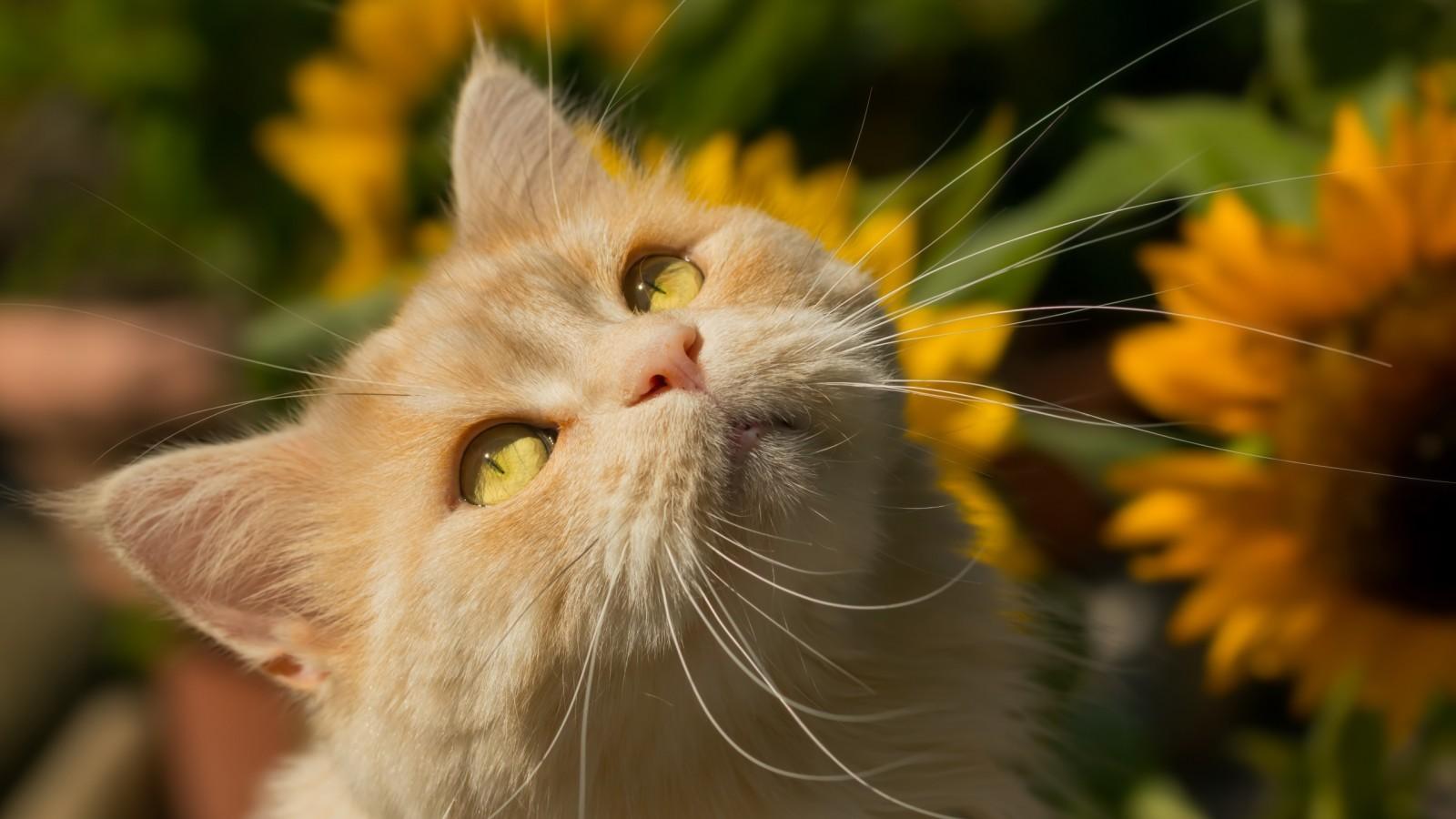 بالصور اجمل صور قطط , صور جميله عن القطط 6108 7