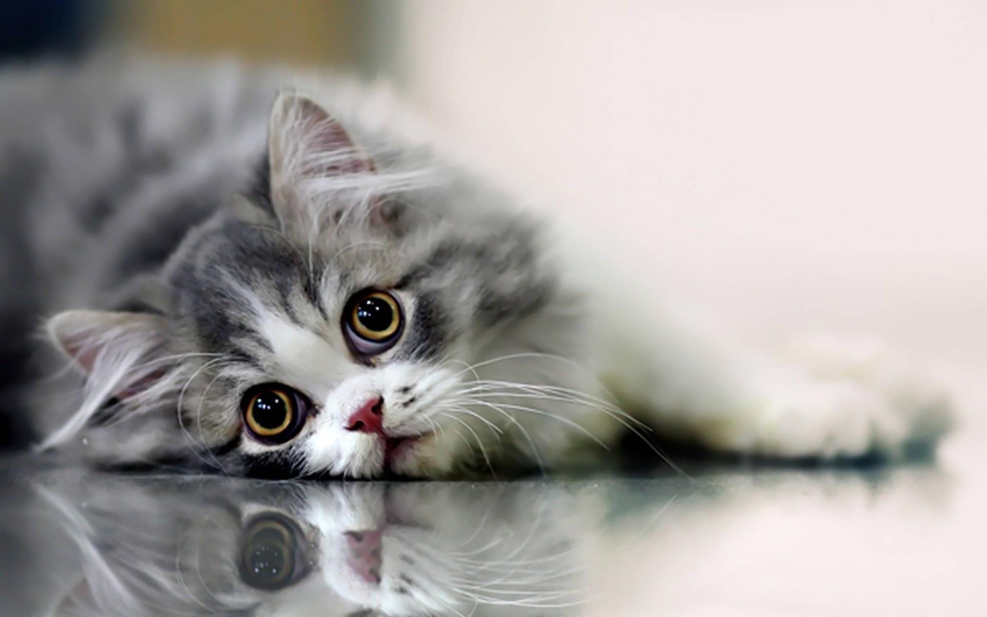 بالصور اجمل صور قطط , صور جميله عن القطط 6108 8