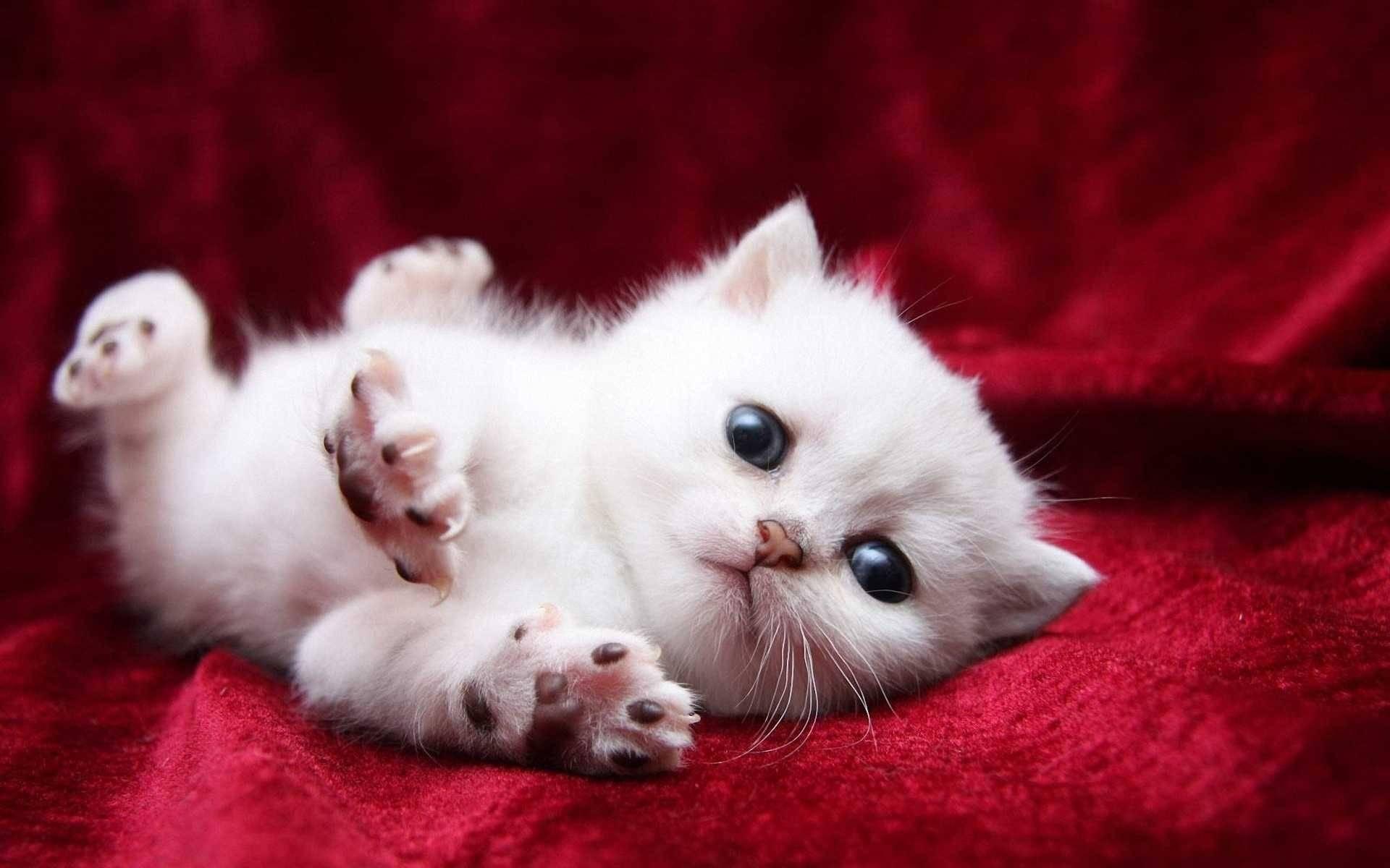 بالصور اجمل صور قطط , صور جميله عن القطط 6108 9