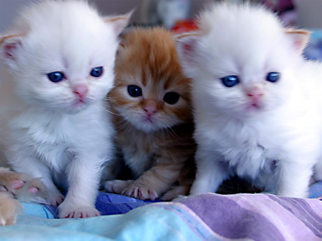 بالصور اجمل صور قطط , صور جميله عن القطط 6108