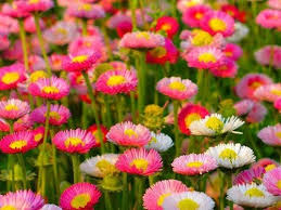 بالصور اجمل ورود العالم , اروع ورد جميل في العالم 616 10