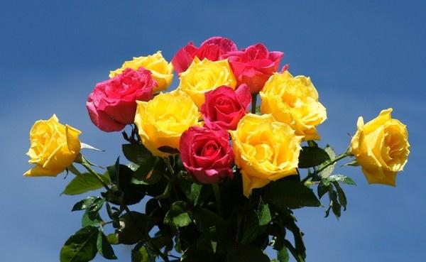 بالصور اجمل ورود العالم , اروع ورد جميل في العالم 616 2