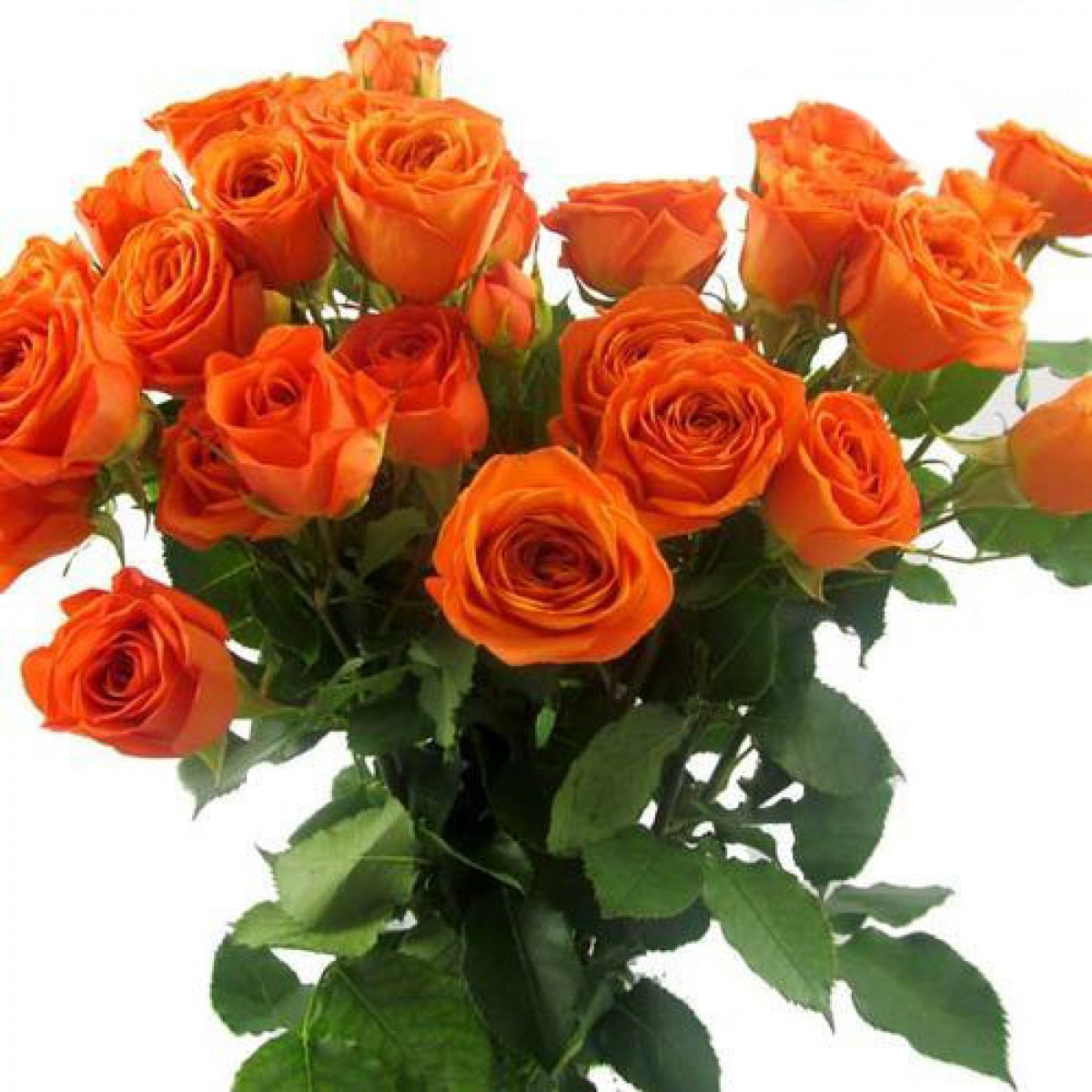 صوره صور ورد حلوه , احلى باقه صور من الورود