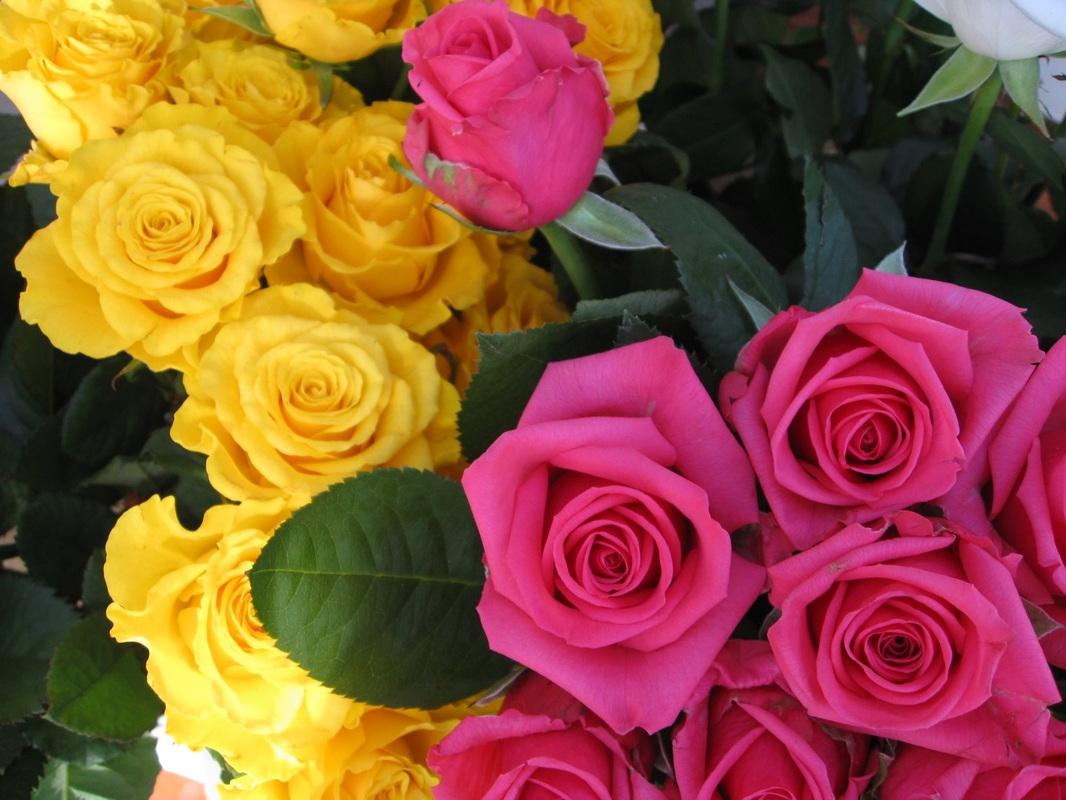 بالصور صور ورد حلوه , احلى باقه صور من الورود 6161 10