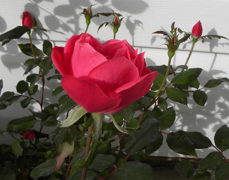 بالصور صور ورد حلوه , احلى باقه صور من الورود 6161 12