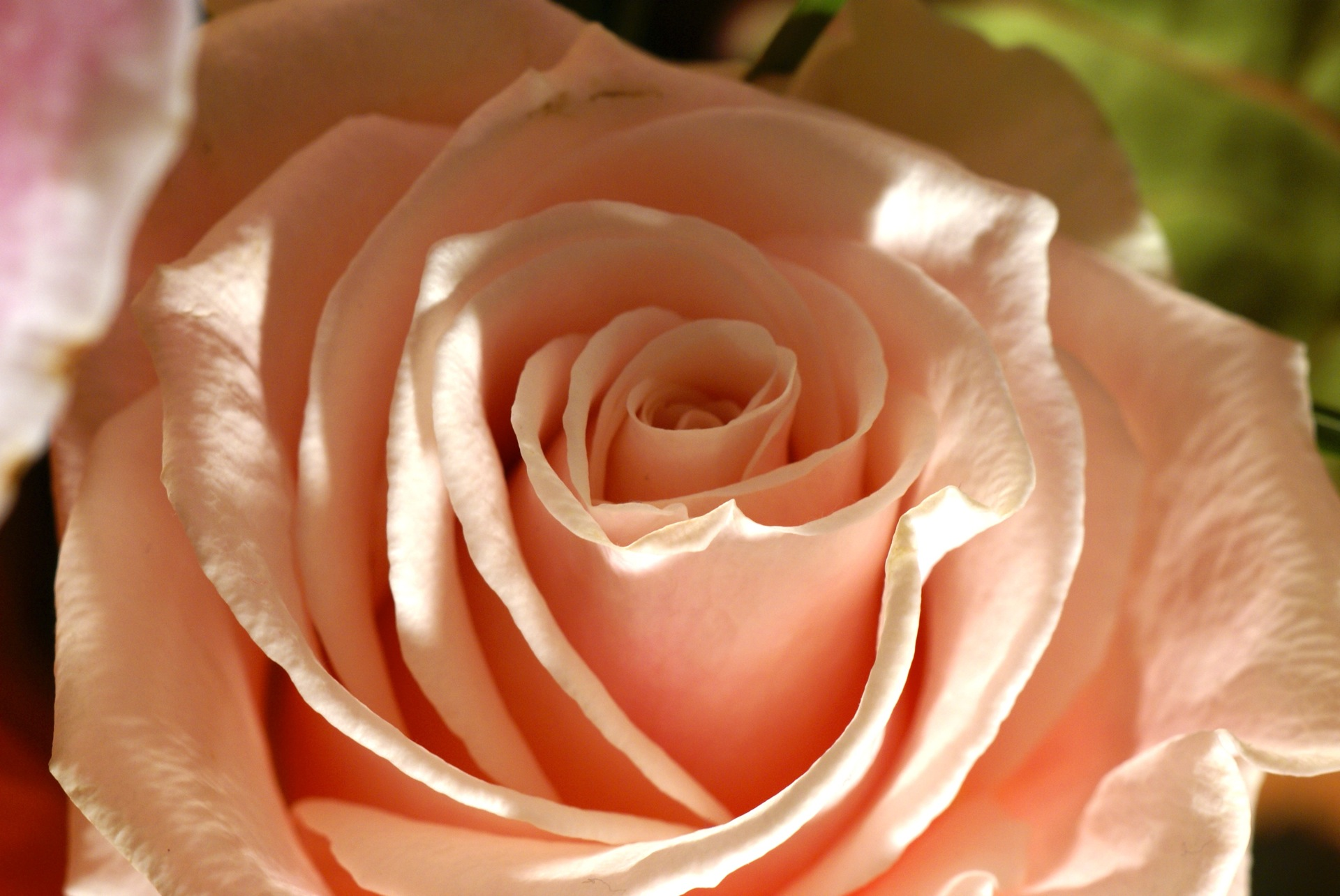 بالصور صور ورد حلوه , احلى باقه صور من الورود 6161 7