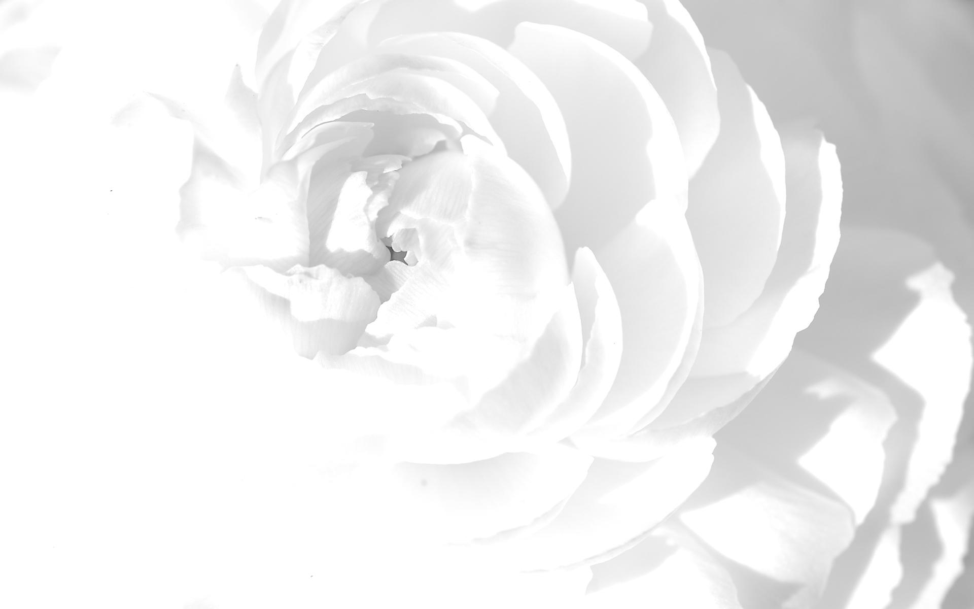 بالصور خلفية بيضاء ساده , اجمل الخلفيات البيضاء 6164 1