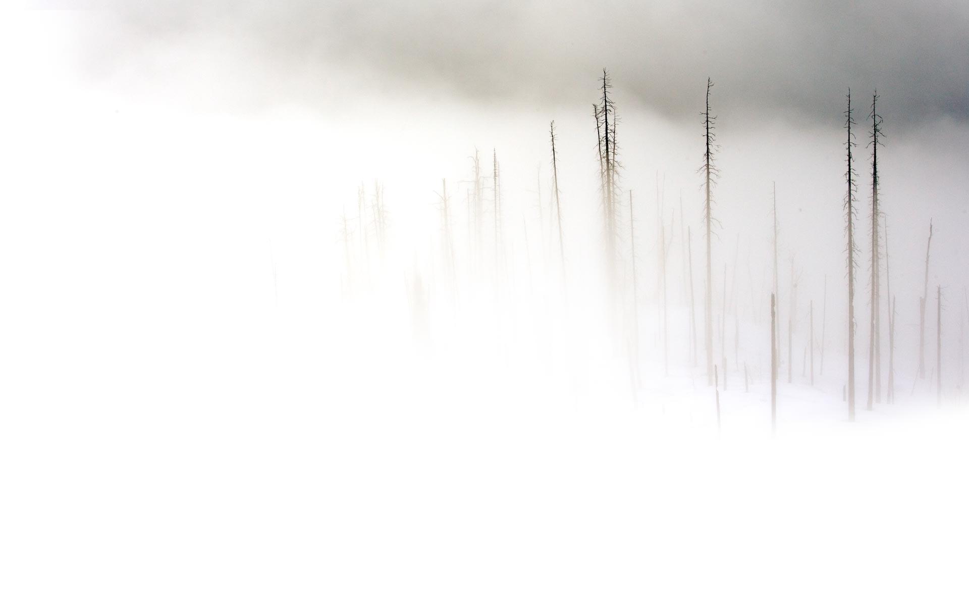 بالصور خلفية بيضاء ساده , اجمل الخلفيات البيضاء 6164 12