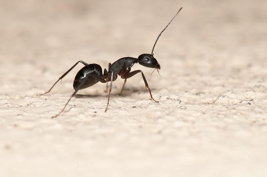بالصور معلومات عن النمل , بعض المعلومات عن حياه النمل 6191