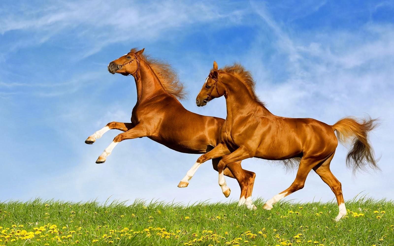 بالصور اجمل صور خيول , اجمل الخيول الساحرة 3579 10