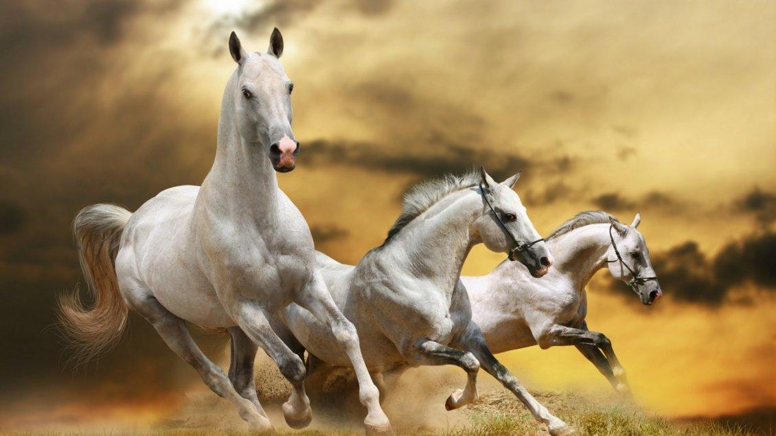 بالصور اجمل صور خيول , اجمل الخيول الساحرة 3579 11