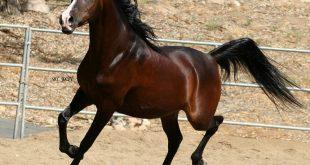 صوره اجمل صور خيول , اجمل الخيول الساحرة