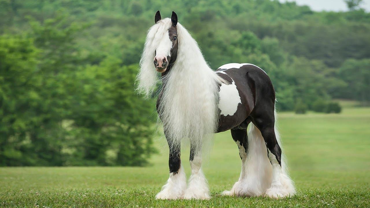 بالصور اجمل صور خيول , اجمل الخيول الساحرة 3579 2