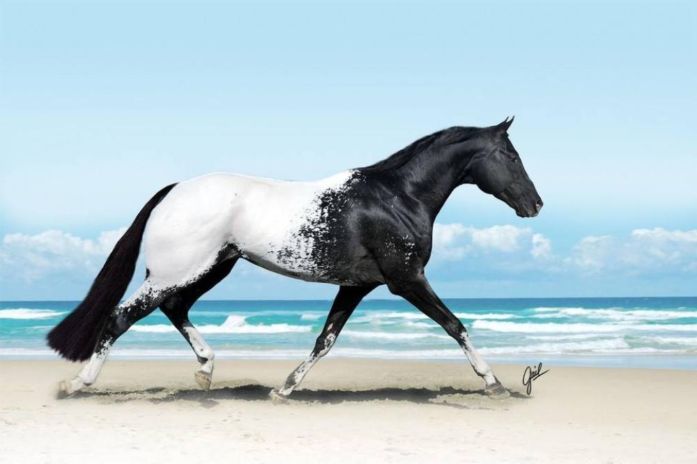 بالصور اجمل صور خيول , اجمل الخيول الساحرة 3579 6