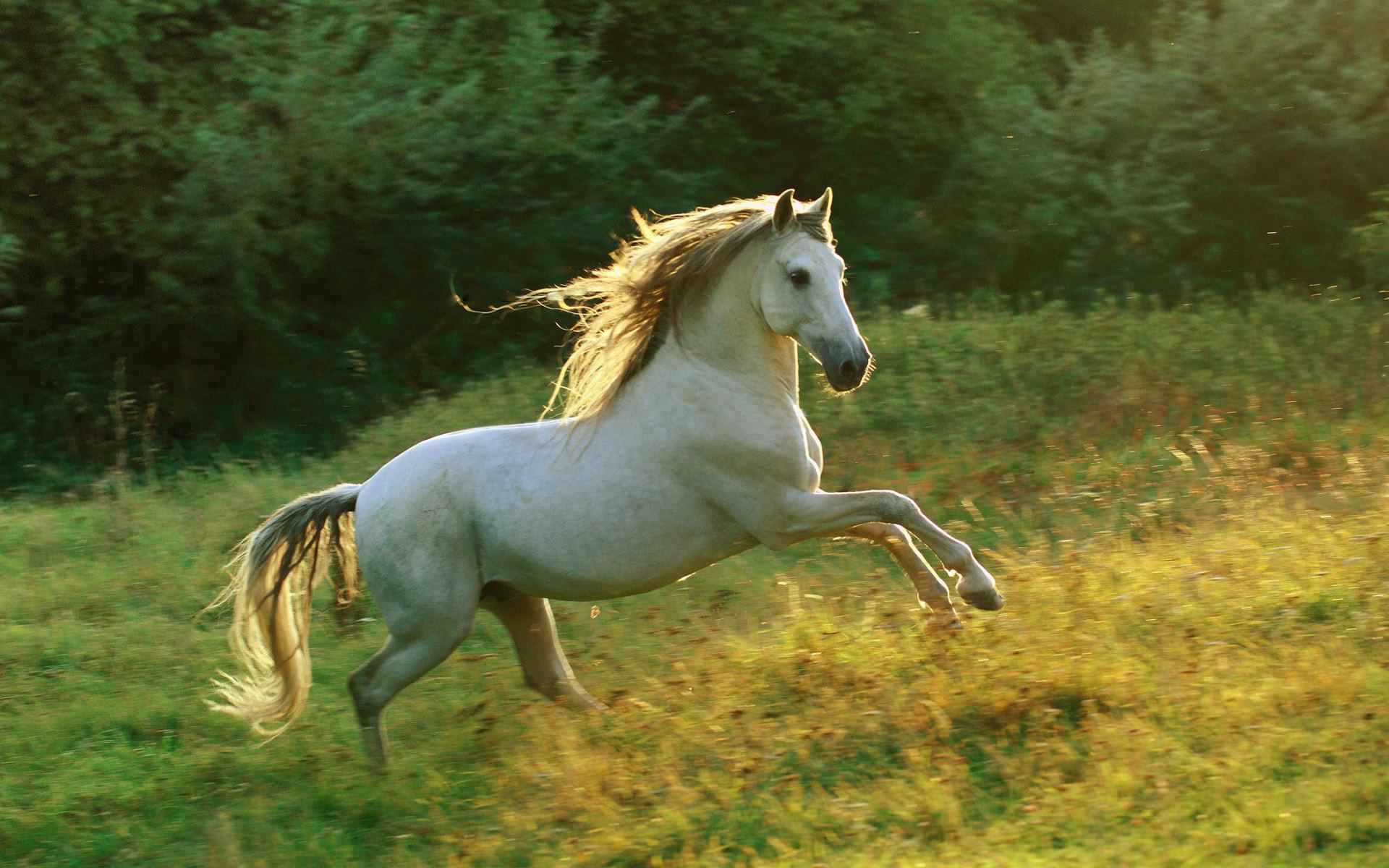 بالصور اجمل صور خيول , اجمل الخيول الساحرة 3579 7