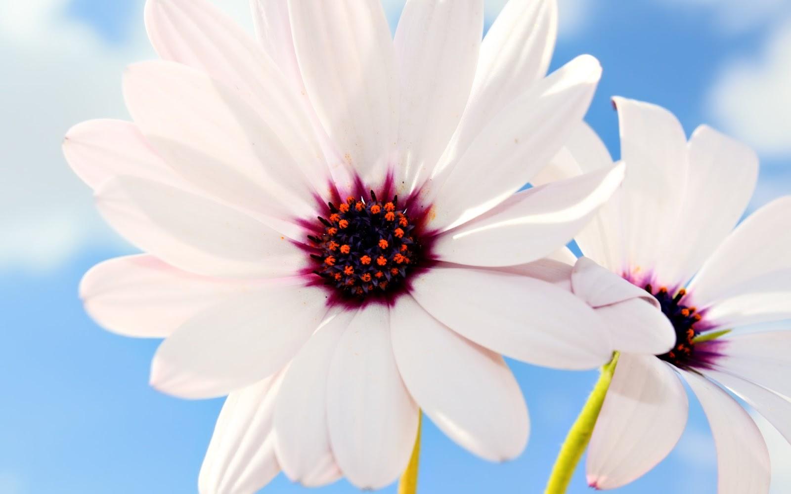 بالصور بوكيه ورد ابيض , اجمل باقات الورد الابيض 3661 1