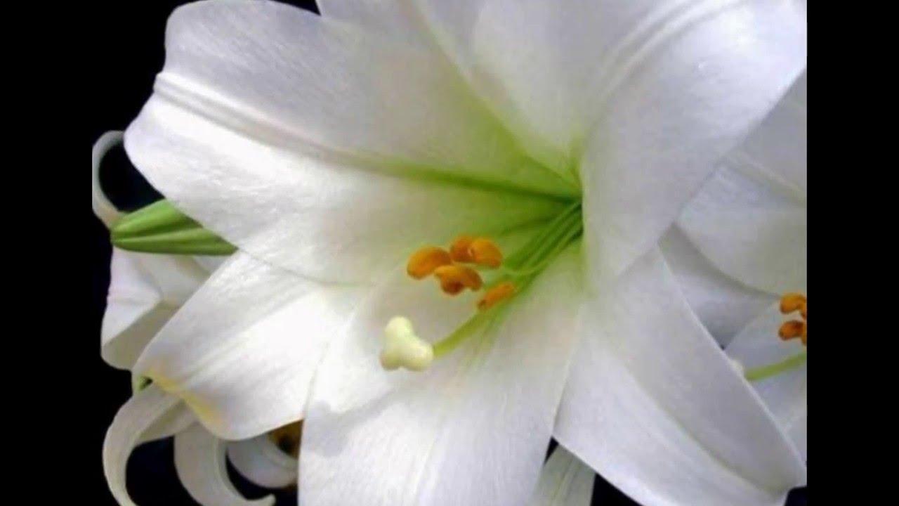 بالصور بوكيه ورد ابيض , اجمل باقات الورد الابيض 3661 4