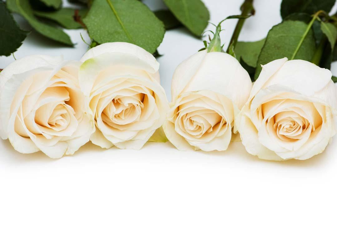 بالصور بوكيه ورد ابيض , اجمل باقات الورد الابيض 3661 6