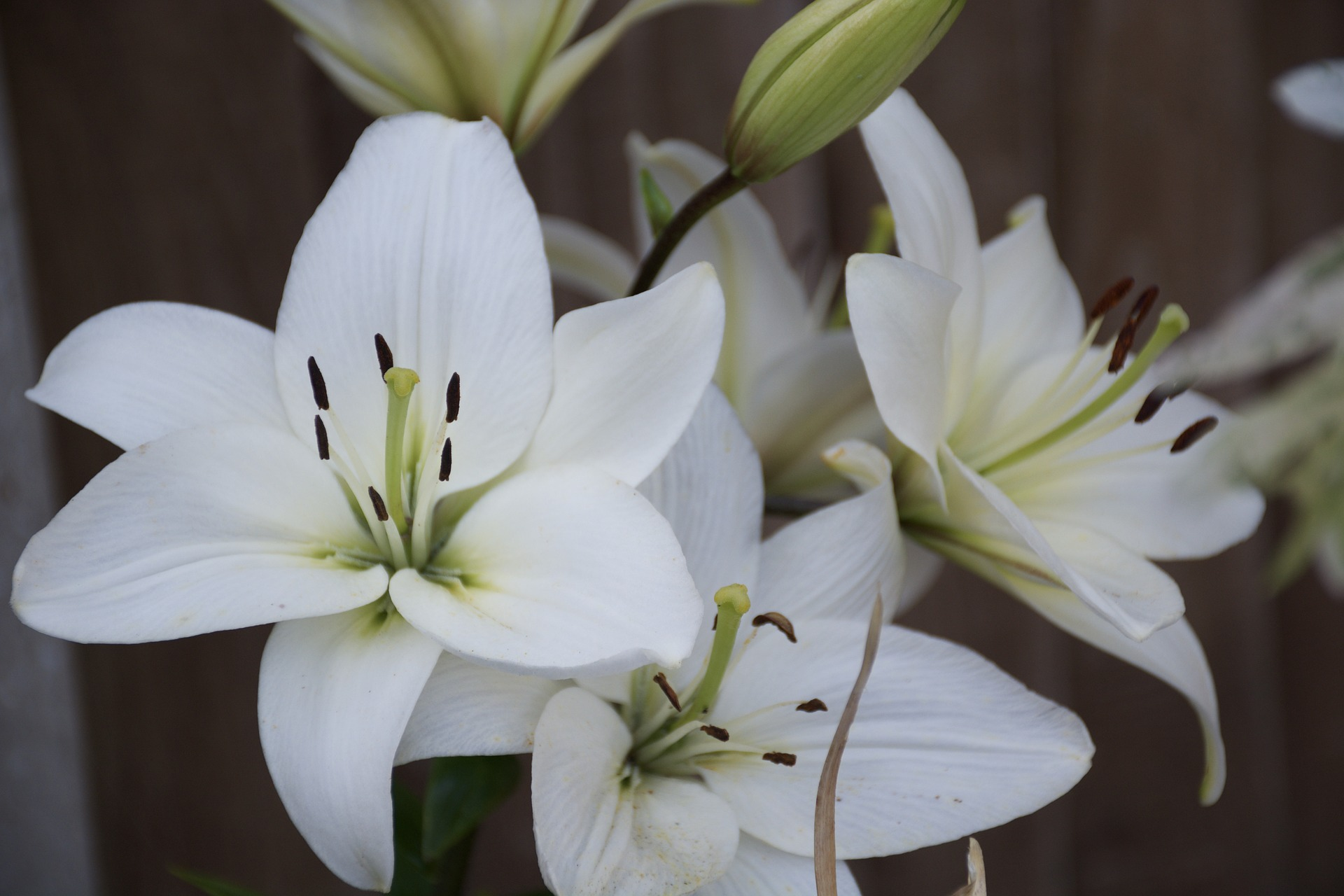 بالصور بوكيه ورد ابيض , اجمل باقات الورد الابيض 3661 7
