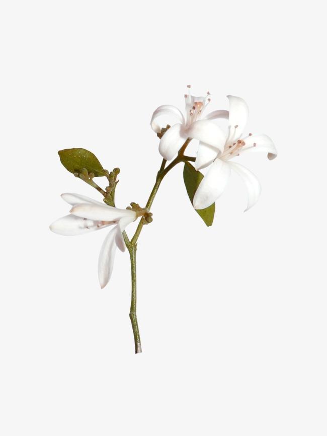 بالصور بوكيه ورد ابيض , اجمل باقات الورد الابيض 3661 8
