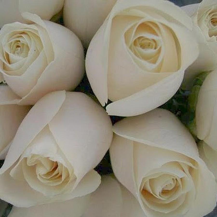 بالصور بوكيه ورد ابيض , اجمل باقات الورد الابيض 3661 9