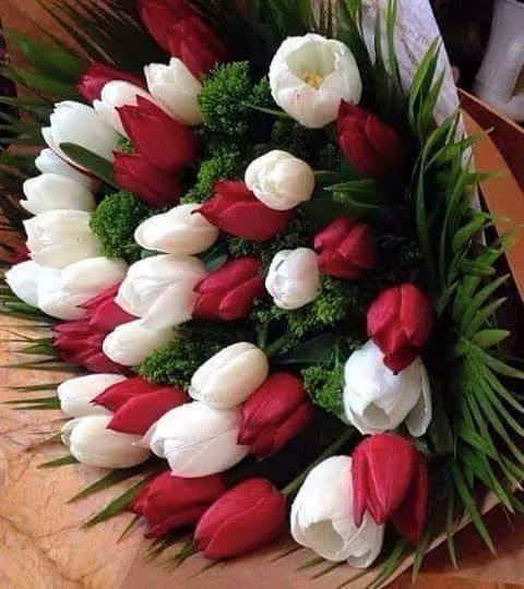 بالصور صور زهور , الزهور وجمالها في صور 86 10