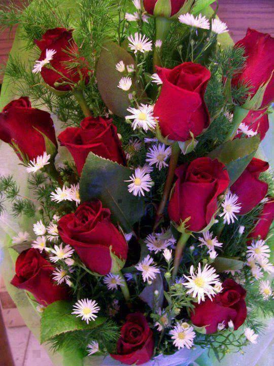 بالصور صور زهور , الزهور وجمالها في صور 86 11