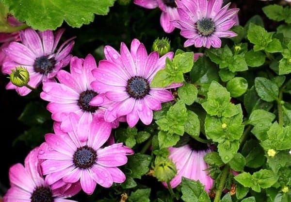 بالصور صور زهور , الزهور وجمالها في صور 86 12