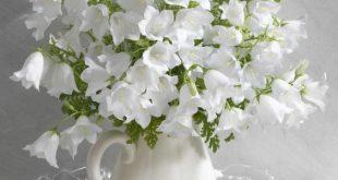 بالصور صور زهور , الزهور وجمالها في صور 86 13 310x165
